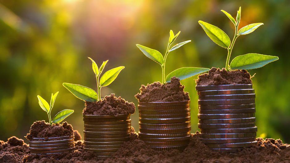 Kapitalanlagemanagement - Bedeutung in der Assekuranz verstehen