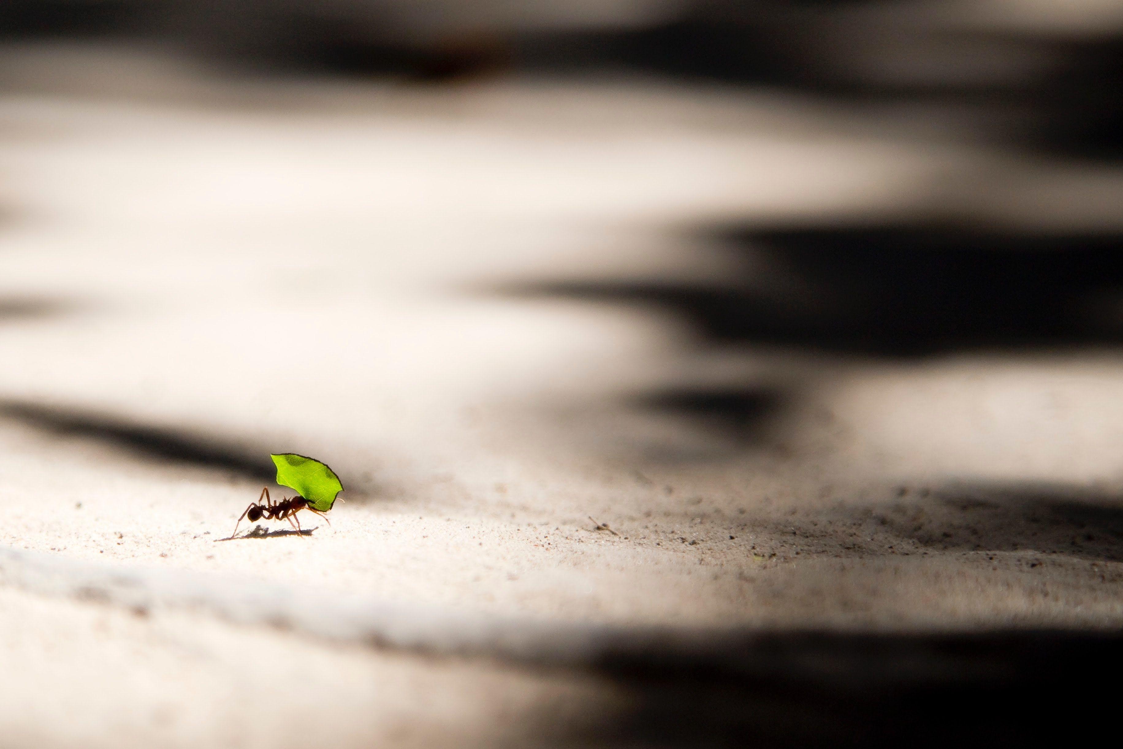 Psychische Gesundheit und New Work – Resilienz