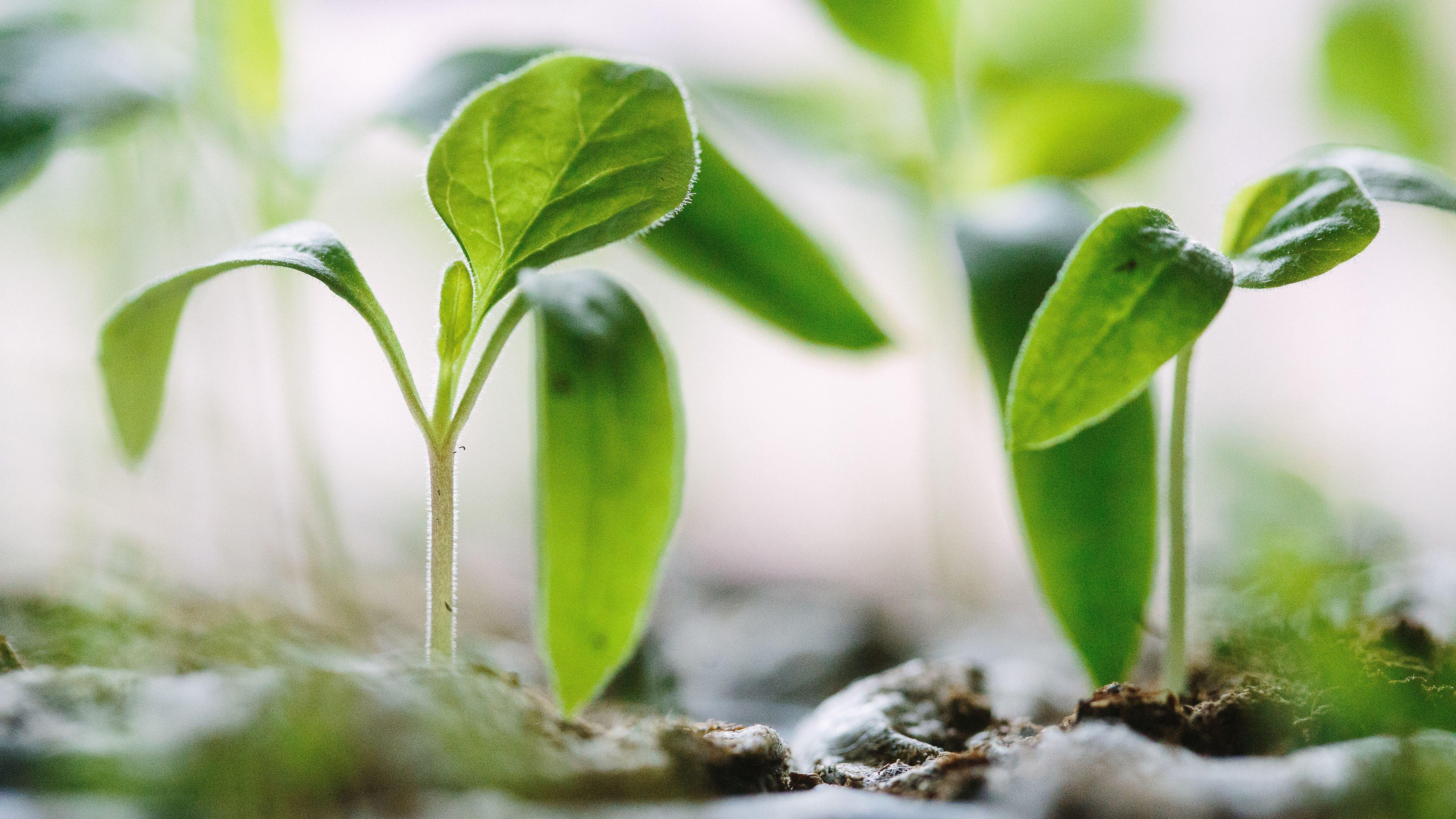 Themendossier 2/2020: Aktuelle Zahlen und Fakten zur Nachhaltigkeit in der Finanzbranche