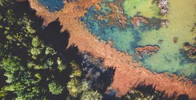 Ecosystemizer - Erfolgreich in digitalen Ökosystemen positionieren