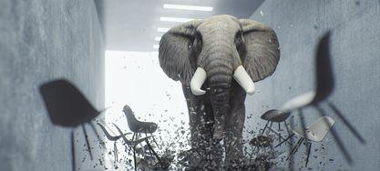 Wütender Elefant im Büro richtet Schaden an